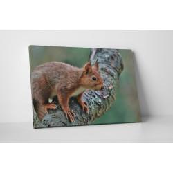 Figyelmes mókus